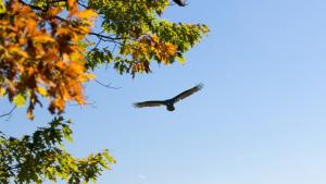 Bird flying in forest